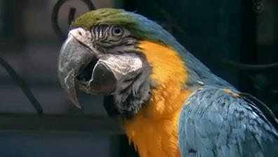 嘘の戦争マギーのバー800の鳥はオウム?インコだった!声は誰?